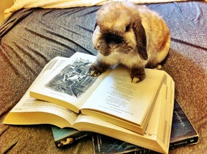 bunny-reading book