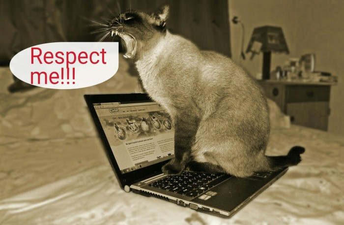 respect cat